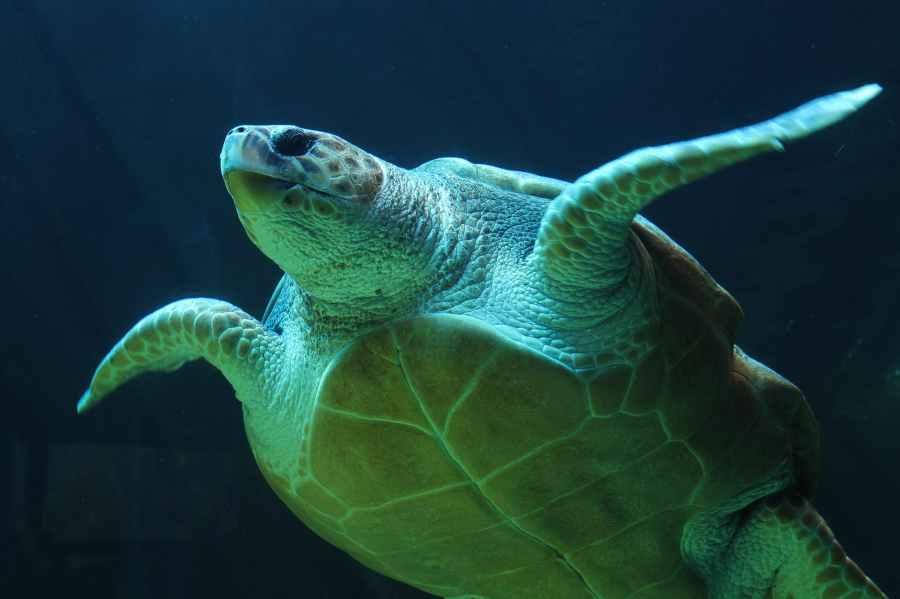 underwater sea turtle turtle sea life